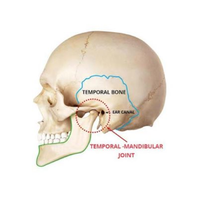 Temporal Mandibular Joint. shows the position of the joint where it connects with the ear canal and temporal bone